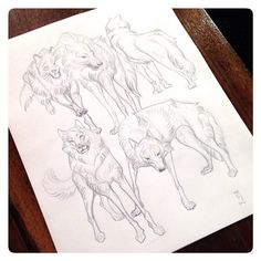 A page of wolves. #jawcooper #graphite #wolf