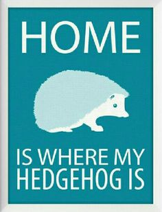 "♡☆ ""Home Is Where My Hedgehog Is!"" ☆♡"