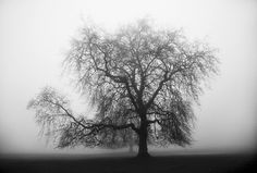 Garlinda Birkbeck Photography - Trees