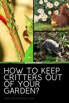 Those fuzzy little bunnies, squirrels, deer, and other critters are adorable running around your back yard, they are cute but learn How To Keep Critters Out Of Your Garden | Gardening Tips For All | How to Get Rid of animals In Your Garden | Critters Control | Natural Critters Control Tips | Gardening Tips | Gardening |Gardening For Beginners | Gardening Tips and Tricks for Beginners | How To Garden | Basic Gardening Tips For Everyone #gardening #gardeningtips #vegetable #foodgardening
