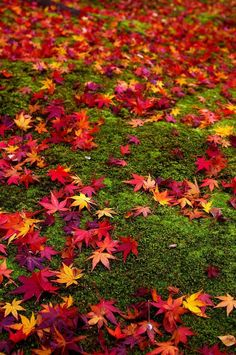 Fall leaves  at aki by ~Aliss86 on deviantART