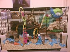 Mice Mouse, Pet Mice, Mouse Cage, Hamster Care, Hamster House, Animals And Pets, Small Animals, Rodents, Diy Toys