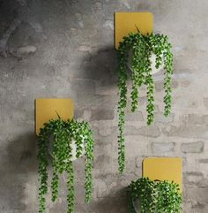 Decorate your home with your favorite green plants with the elegant art-deco Christophe Modern Wall Planter! Made from durable, eco-friendly metal cement.