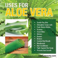Uses for Aloe Vera - Soothe Dry Skin, insect bites, strengthen weak nails, fade stretch marks, blisters, rashes, bruises, mouthwash, eczema, hair conditioner