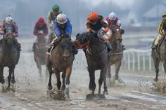 """Horse racing in Norway - """"Don't run by me!!"""" via Twitter"""