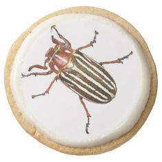 There's a Bug on Your Cookie! Round Sugar Cookie