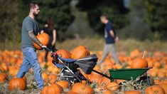 2018 has provided perfect pumpkin-growing weather. Pumpkin Growing, Autumn Colours, England, Weather, Halloween, Outdoor, Outdoors, Outdoor Games, English