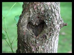 Community Post: 11 Trees That Look Like Hearts Love Is All, Gods Love, That Look, I Love Heart, Happy Heart, Romantic Nature, Heart In Nature, Heart Tree, Art Moderne