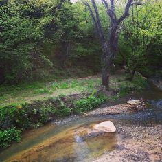 Το #Platystomo έχει μια σπάνια ομορφιά που μας μαγεύει και μας προτρέπει καθε στιγμή να το εξερευνήσουμε! #ThermaePlatystomou #Nature  Photo credits: @melissanthy