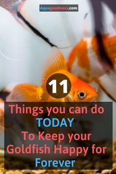 Warning DECAL trained GOLDFISH fantail for pet pond aquarium fish tank sticker