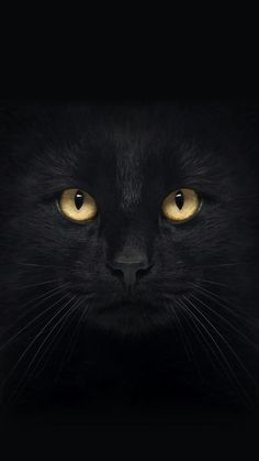 Black cat Art of Cats Black cat Wallpaper Gatos, Cat Wallpaper, Black Wallpaper, I Love Cats, Crazy Cats, Cool Cats, Cute Kittens, Cats And Kittens, Beautiful Cats