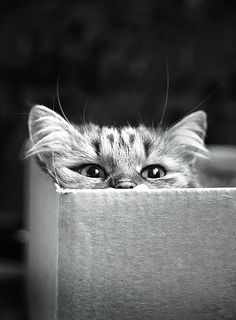 Kitteh in a box - look at those eyes