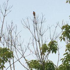 하늘이 높다. 가을이다. 새 한마리가 가을을 느끼고 있다. 창원 사파동의 경남FC 앞에서.