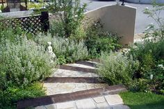 階段周り植栽 ガーデニング