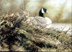 Alan M. Hunt was born in England, studying zoology at Leeds College and Bristol University. His artist training came from Middlesborough Ar. Bristol University, Duck Art, Bird Paintings, Photorealism, Zoology, Wildlife Art, Bird Prints, Bird Art, Beautiful Birds