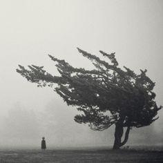 Arbol; haunting