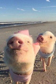 New baby animals adorable piggies ideas Cute Baby Pigs, Cute Piglets, Cute Babies, Baby Piglets, Baby Animals Pictures, Cute Animal Pictures, Animals And Pets, Farm Animals, Cute Little Animals