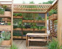 Patio Garden/Planter Boxes - That is a lot of planters! Probably keeps things cool.