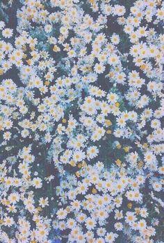 цветы, iphone, телефон, фото, винтаж, обои