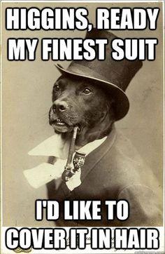 The Best Old Money Dog Memes