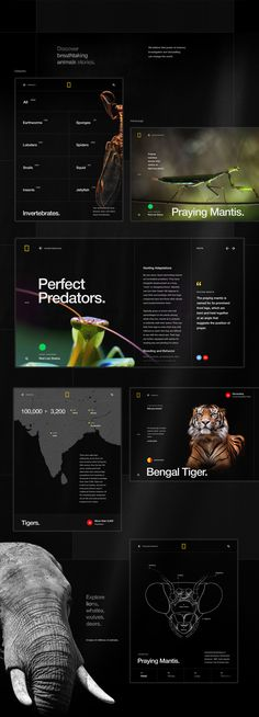 Web Design & UI/UX: National Geographic World Changing Intuitive Site Web Design Websites, News Web Design, Web Design Quotes, Web Design Projects, Design Ideas, Design Design, Logo Design, National Geographic, Website Design Inspiration