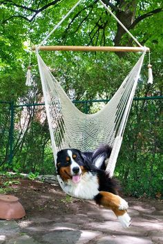 After your lap... it's my favorite place to nap! Bernese Mountain, Mountain Dogs, Outdoor Furniture, Outdoor Decor, Hammock, Dog Training, Home Decor, Homemade Home Decor, Yard Furniture