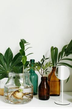 Plants and neutral flowers are my favorite piece of interior decoration at the moment, so I just can't stop looking at this latest styling by Susanna Vento for Sato. I love the way the green takes up all the attention … Continue reading → Indoor Garden, Indoor Plants, Home And Garden, Turbulence Deco, Deco Nature, Interior Plants, Water Plants, Water Garden, Bottle Garden