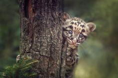23 Incredibly Expressive Animal Portraits by Manuela Kulpa