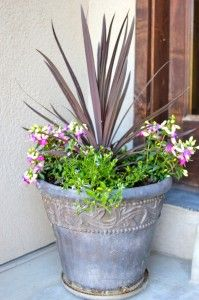 Whats Cooking With RuthieDIY flower pots » Whats Cooking With Ruthie