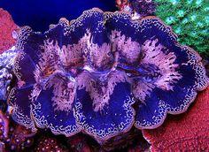 Underwater Creatures, Ocean Creatures, Underwater World, Life Under The Sea, Beautiful Sea Creatures, Salt Water Fish, Sea Slug, Saltwater Tank, Marine Aquarium