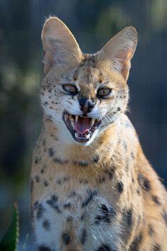 Adelaide Zoo's  #Adelaide #Monarto #Wildlife #Zoo