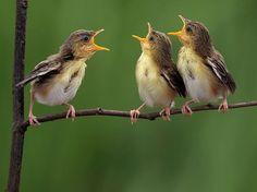 """Fotos humorísticas do fotógrafo indonésio Sijanto Sijanto apresentam os verdadeiros """"Angry birds""""."""