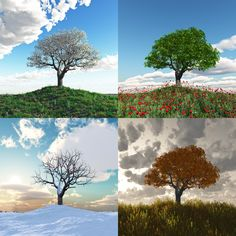 Find Lonely Tree Four Seasons Time Lapse stock images in HD and millions of other royalty-free stock photos, illustrations and vectors in the Shutterstock collection. Thousands of new, high-quality pictures added every day. Seasons Of Life, Four Seasons, Zen Meditation, Different Seasons, Marriage And Family, Tree Crafts, Stock Foto, Months In A Year, Art Plastique
