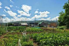 田舎の風景。 Outdoor Spaces, Indoor Outdoor, Japan, Mountains, Landscape, Amazing, Places, Summer, Travel