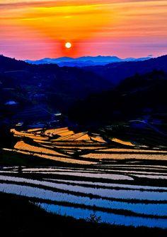 Terraced rice fields #japan #okayama