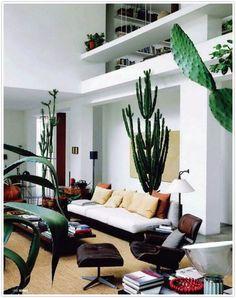 towering cacti as interior decor.