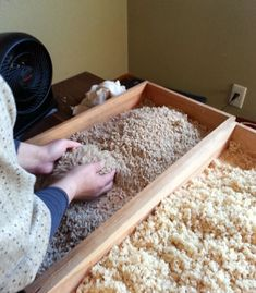 koji rice for miso making