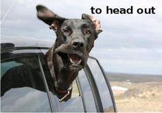 dog_head_out_window_funny