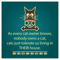 Quite true! With my 3 Crazy cats anyway  #cats #humor