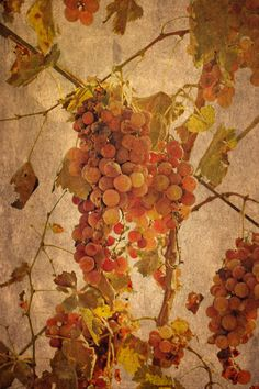 Grapes - the most noble and challenging of fruits. Art Print by Around the Island Photography on Society6.