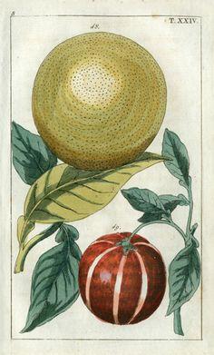 Wilhelm Natural History Botanical Prints 1810 #dailyconceptive #diarioconceptivo