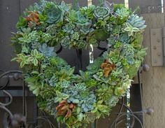 Succulent Live Wreath, Heart Succulent Wreath - Valentines Day Heart Shaped Wedding Succulent Wreath on Etsy, $95.00