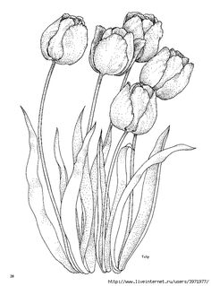 Printable Beautiful Tulip Coloring Pages - Free Coloring Sheets Painting Patterns, Fabric Painting, Painting & Drawing, Tulip Drawing, Realistic Flower Drawing, Flower Coloring Pages, Coloring Book Pages, Tulip Colors, Flower Colors