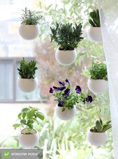 5 Ingenious Indoor Garden Ideas That are Perfect for Small Spaces: Grow a Garden on a Window