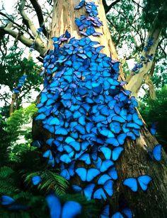 Schmetterlinge haben Ohren