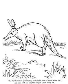 aardvark drawing and coloring page