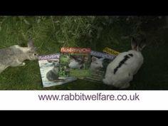 Rabbit Welfare Association Commercial.wmv