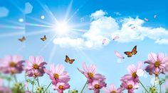 Summer Wallpaper For Jpg Background 1 Hd Wallpapers Hdimges   HD ...