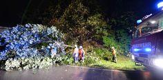 Feuerwehrleute mussten in Freiburg mehrere umgestürzte Bäume entfernen.    Foto: dpa