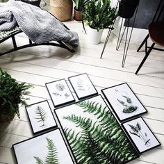set ferns prints